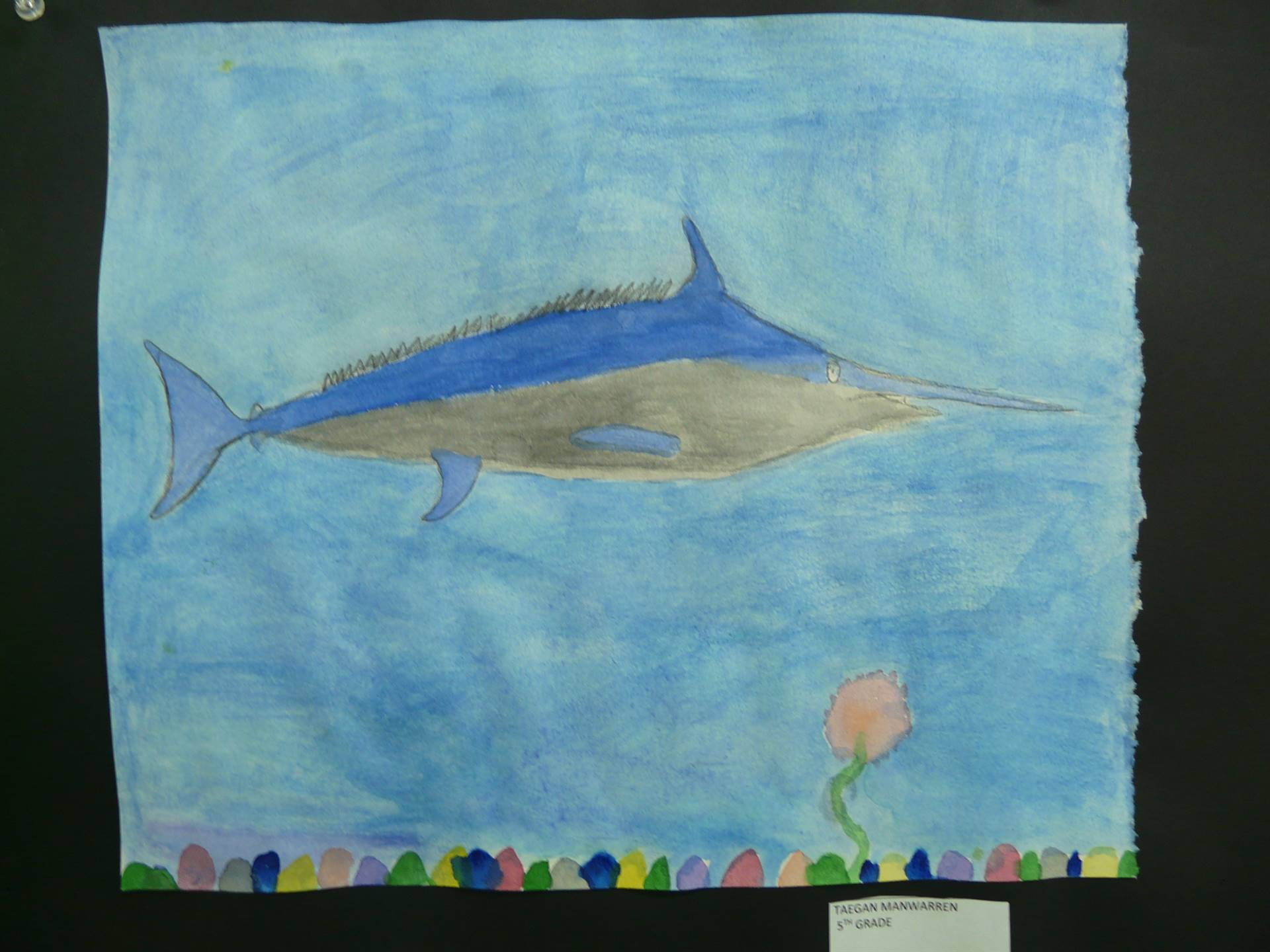 picture of a swordfish